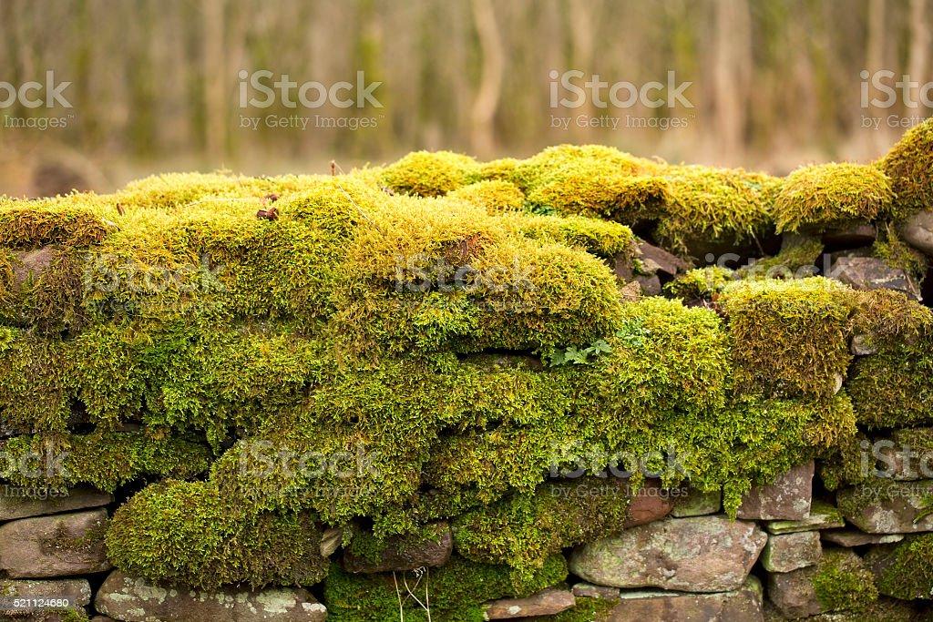 Mossy Wall. stock photo