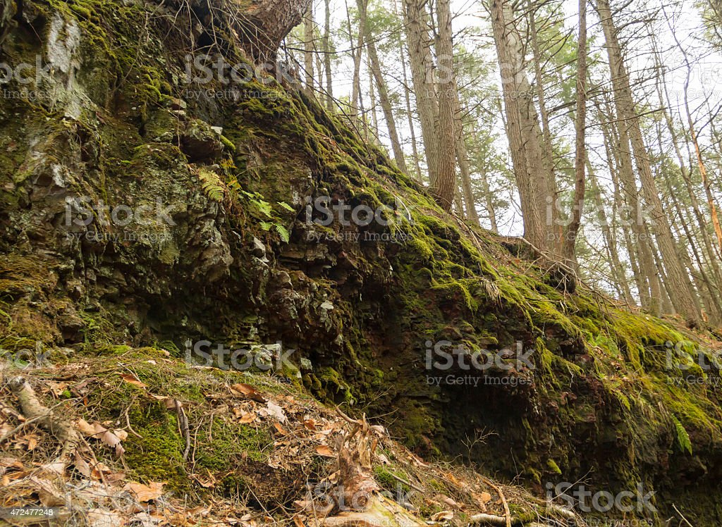 Mossy Wet Cliff stock photo