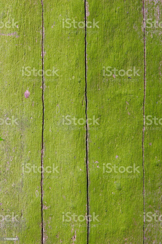 Mossy Wood royalty-free stock photo