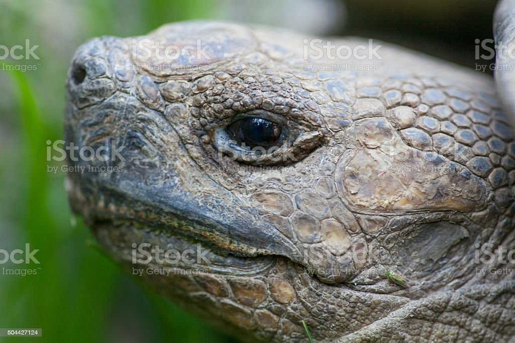 Most African tortoise stock photo