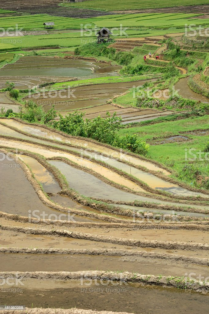 Most Beautiful Rice Terrace in Tule , Mu Cang Chai, Vietnam stock photo