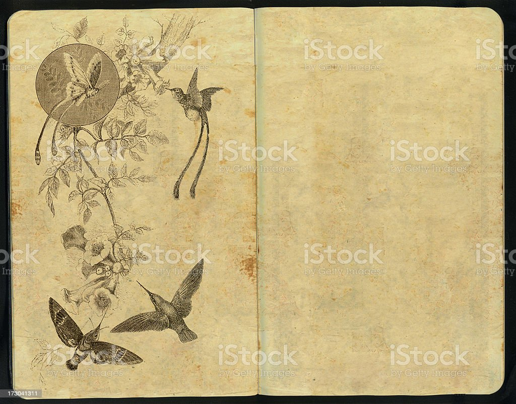 Moth and Humming Bird Sketch Pad stock photo