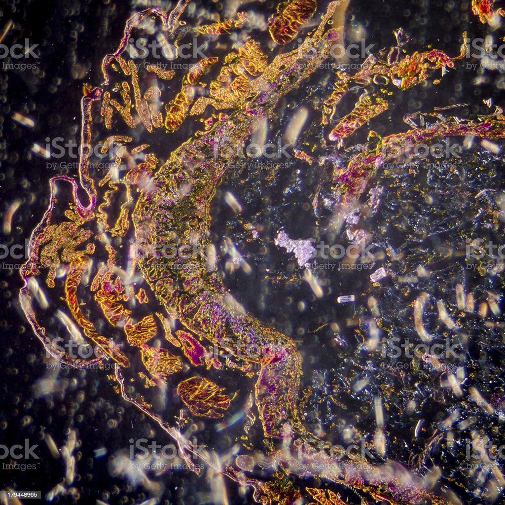 moth caterpillar body cross section, micrograph. royalty-free stock photo