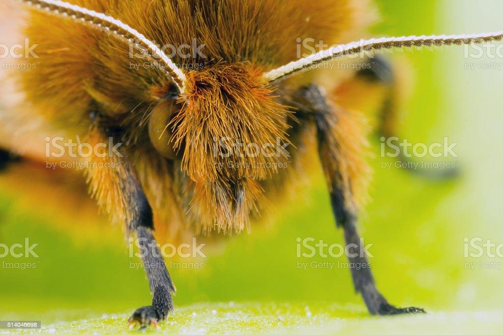 Moth Close Up stock photo