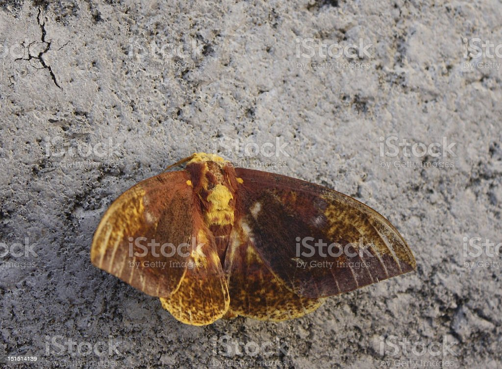 Moth in the Parking Lot stock photo