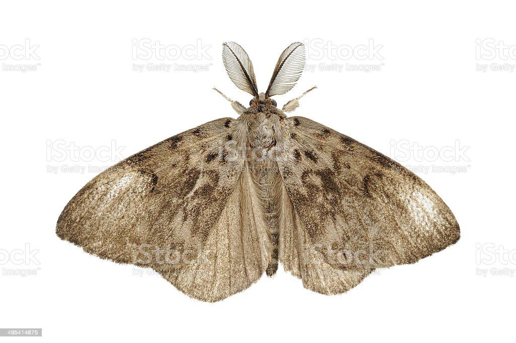 Moth isolated stock photo