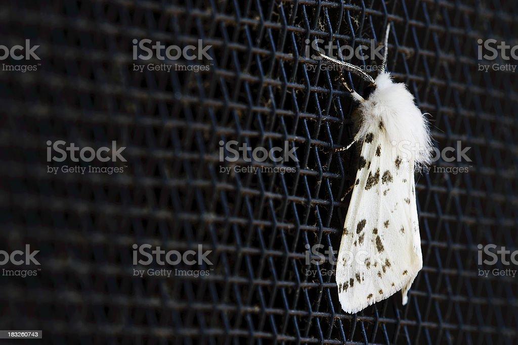 Moth Macro stock photo