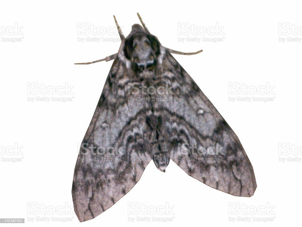 Moth on a white background stock photo