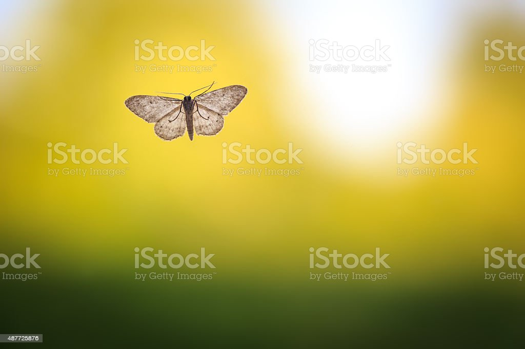 Moth on clean and simple green background stock photo