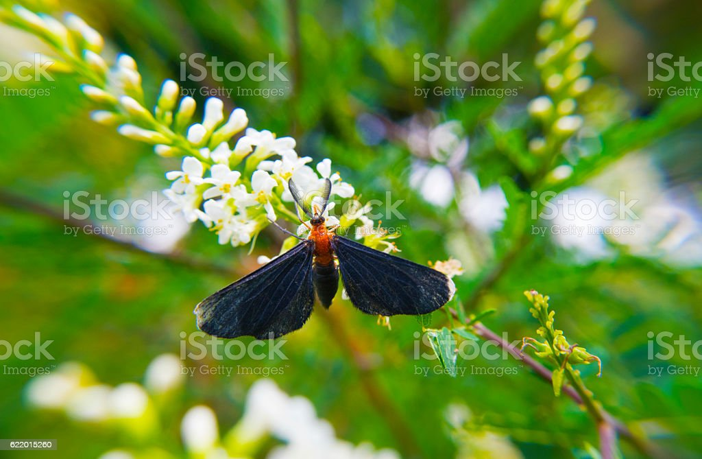 Moth on Flower stock photo