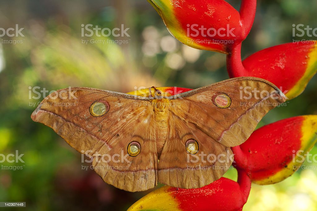 Moth royalty-free stock photo