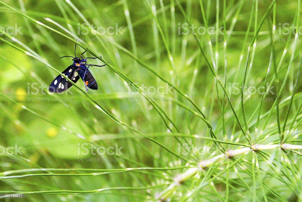 Moth. royalty-free stock photo