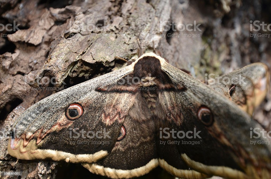 Moth stock photo