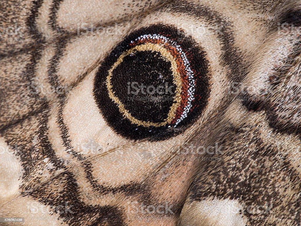 Moth wing detail. Eyespot on Saturnia Eudia pavonia. stock photo
