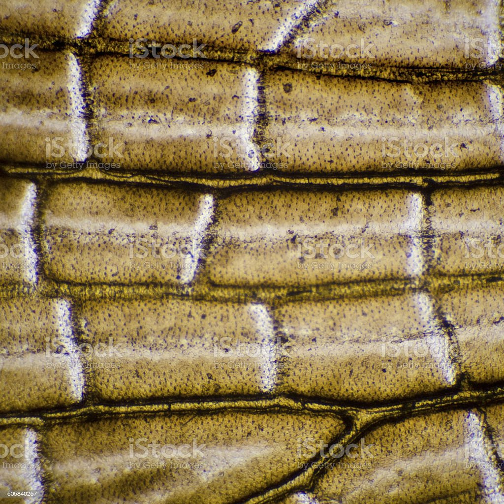 Moth wing under a microscope stock photo