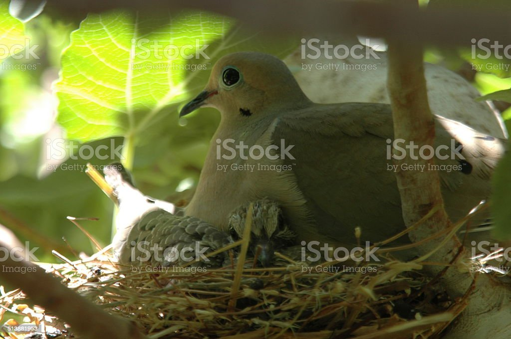 Mother and baby bird stock photo