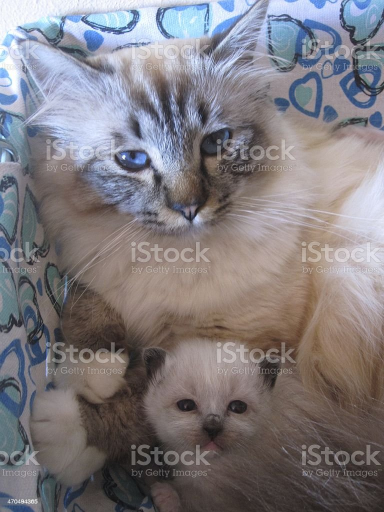Mother and baby cat stock photo