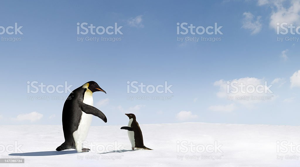 Mother and baby penguin making contact stock photo