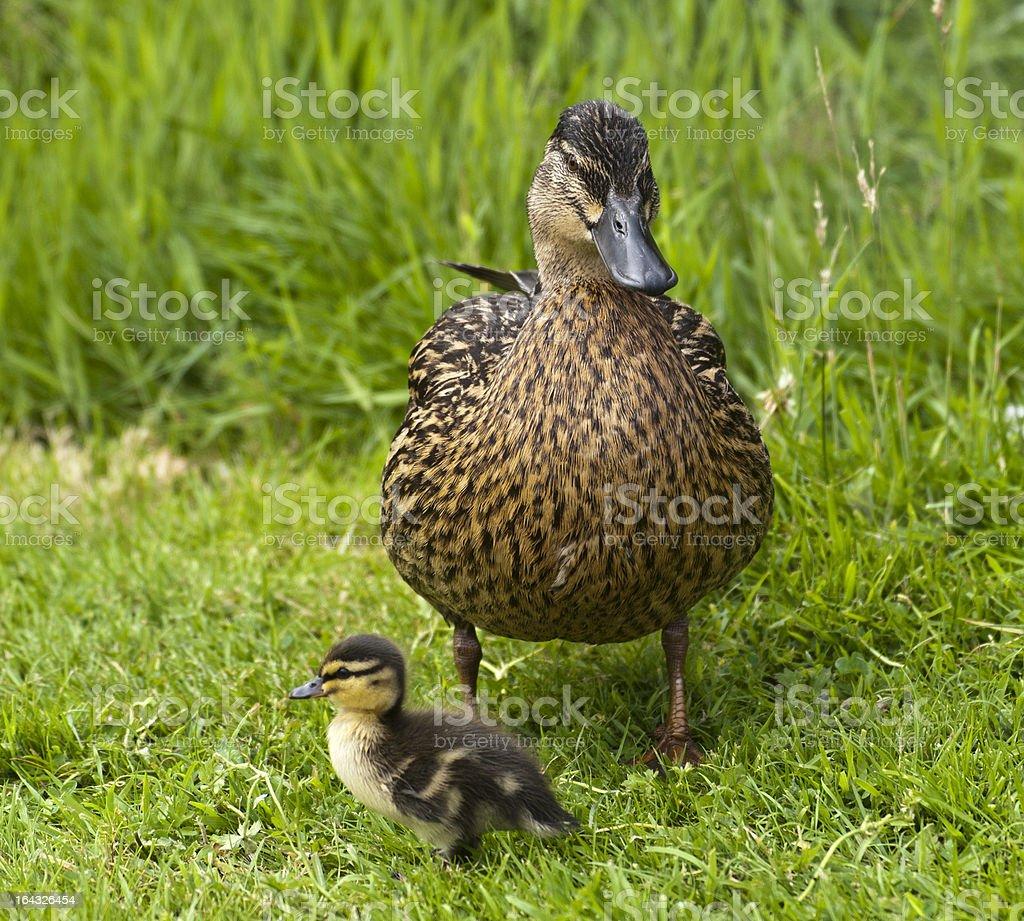 Mutter und Kind Lizenzfreies stock-foto