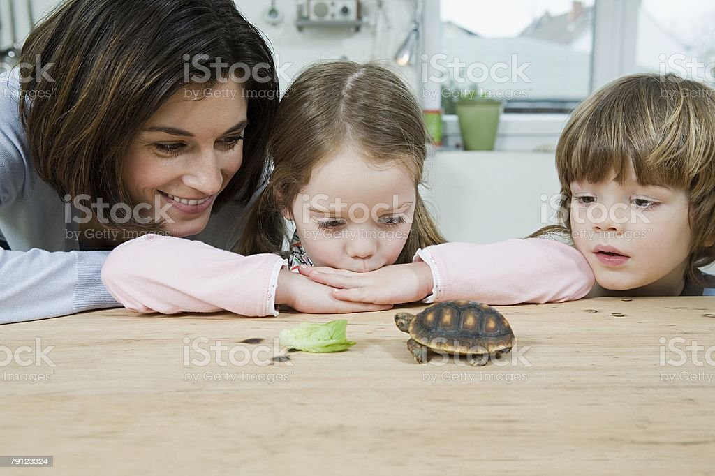 Mother and children feeding a tortoise stock photo