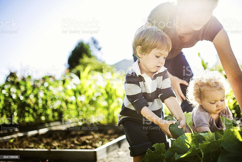 Mother and Children Picking Vegetables royalty-free stock photo