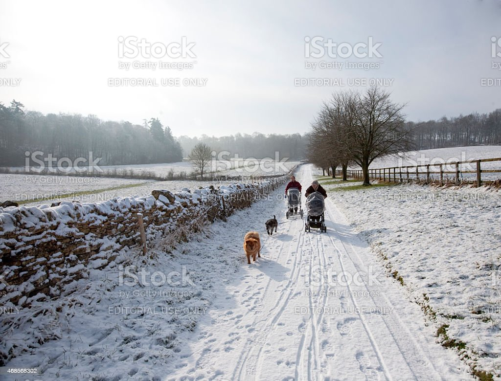 Mother and daughter and walking their dogs stock photo