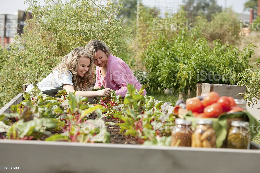 Mother and daughter picking vegetables from their garden royalty-free stock photo