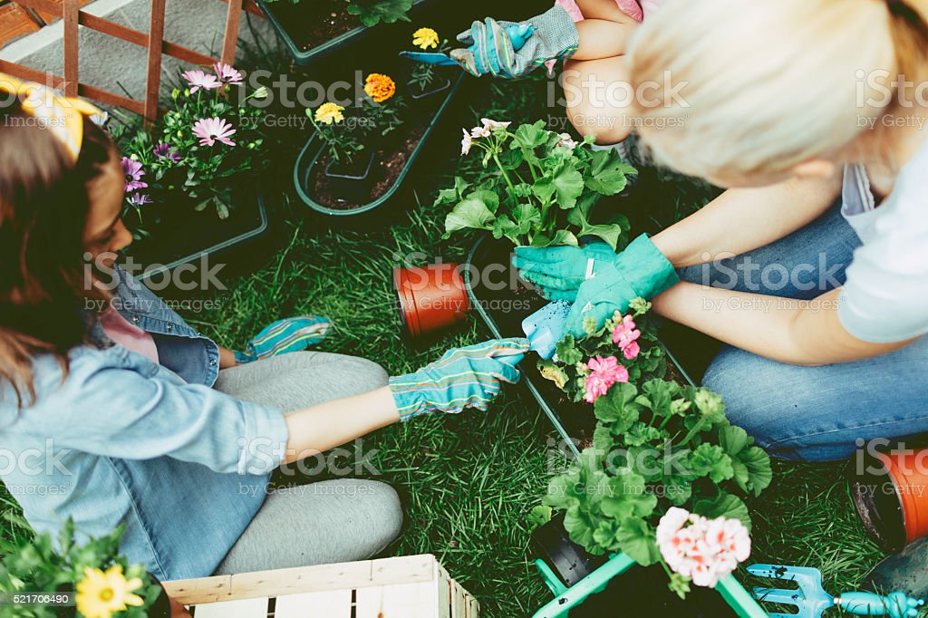 Mother And Daughter Planting Flowers Together. stock photo