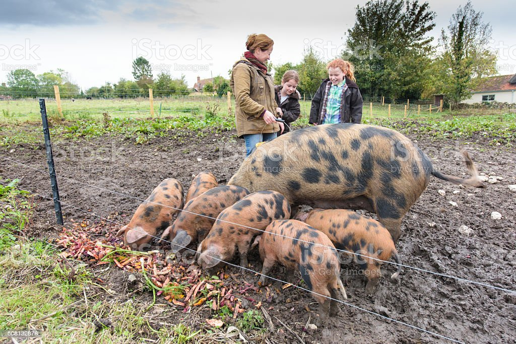 Mother and daughters feeding the pigs stock photo