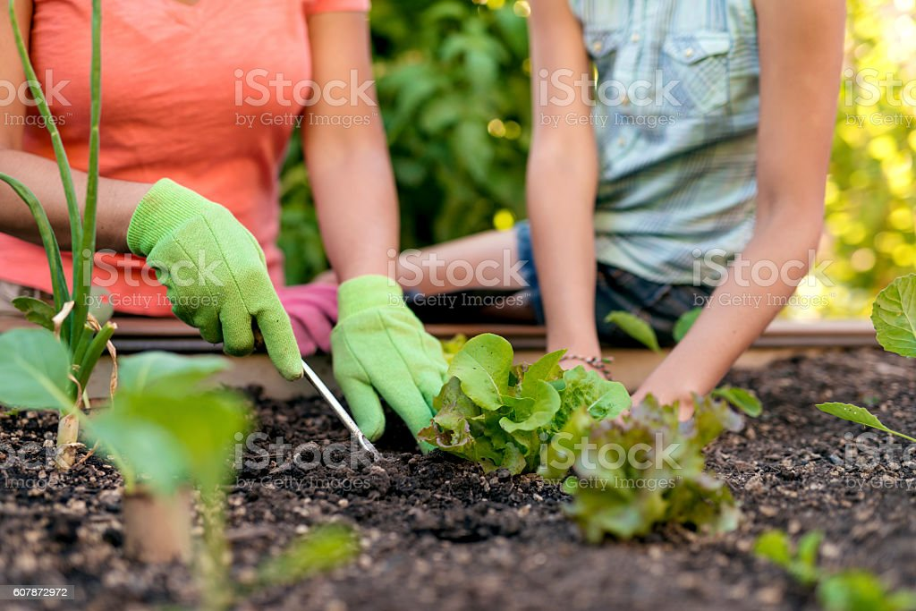 Mother and daughters hands in the garden stock photo
