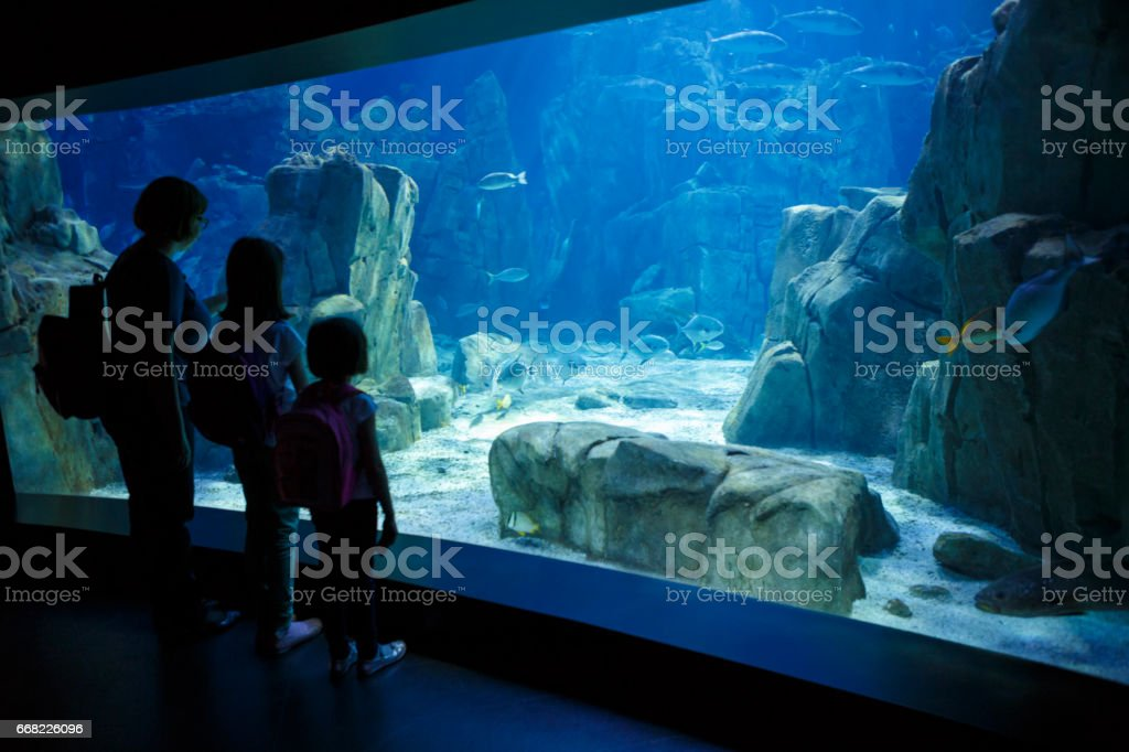 Mother and daughters looking at the fish in a big aquarium stock photo