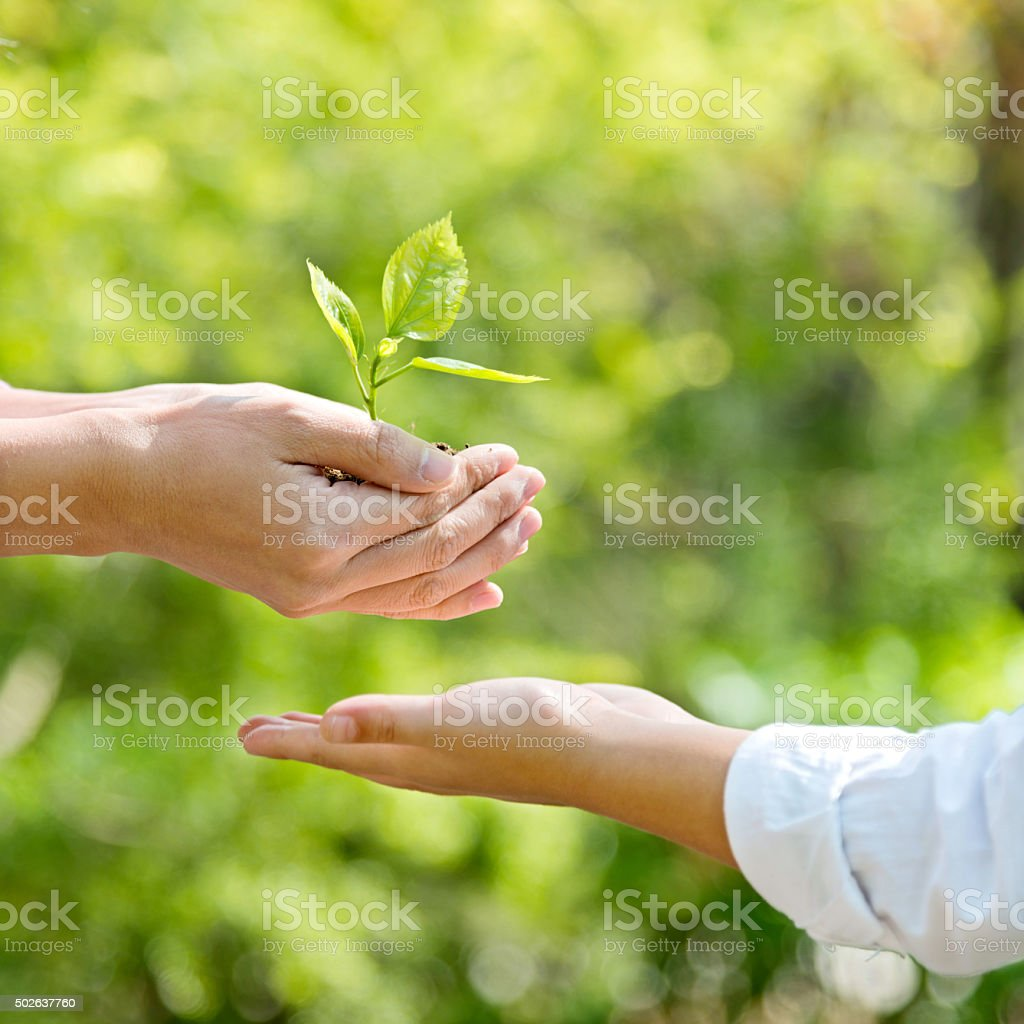 Mother and son hands holding new plant stock photo