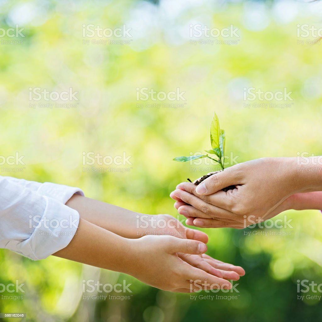 Hands of little boy and his mother holding a young plant.