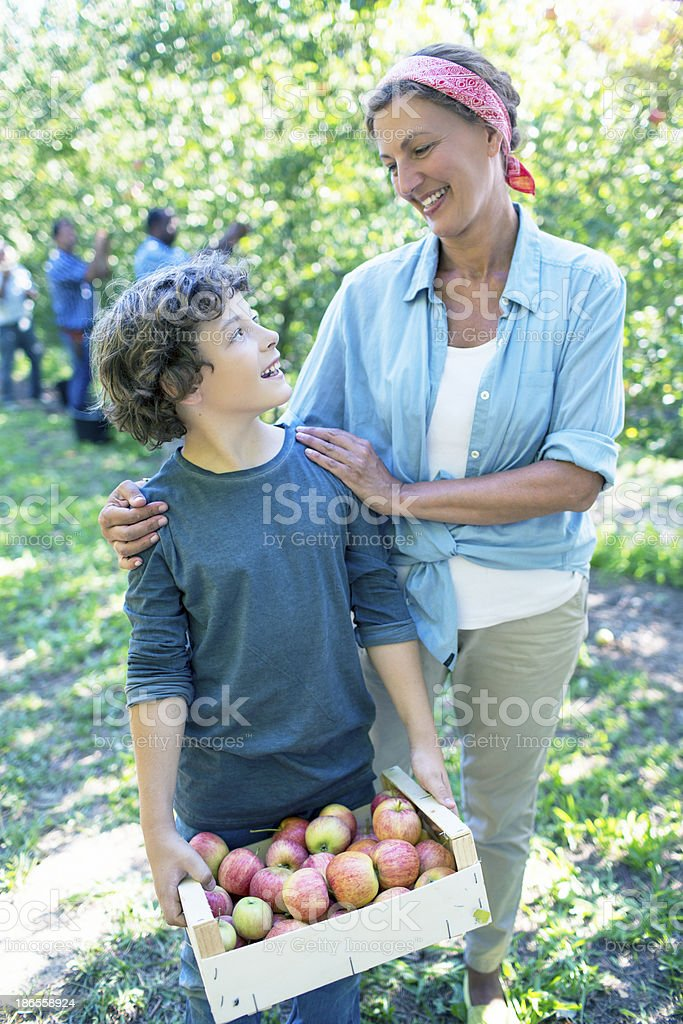 Mother and son in the orchard stock photo
