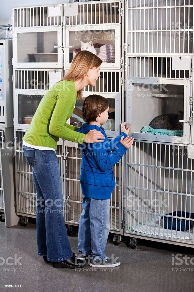 Mother and son looking at cats in animal shelter royalty-free stock photo