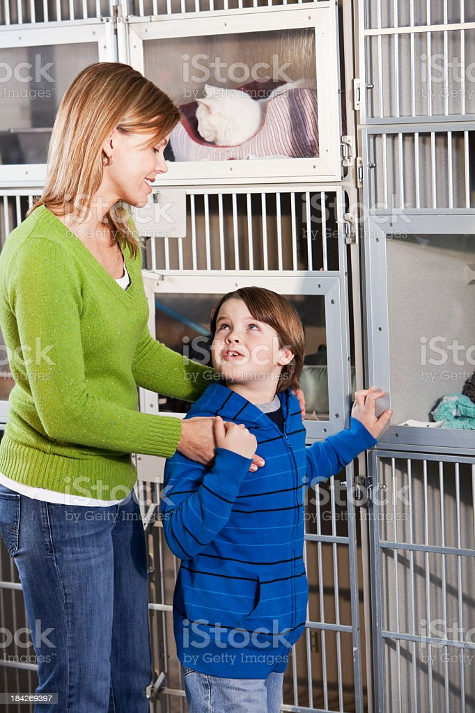 Mother and son looking at cats in animal shelter stock photo