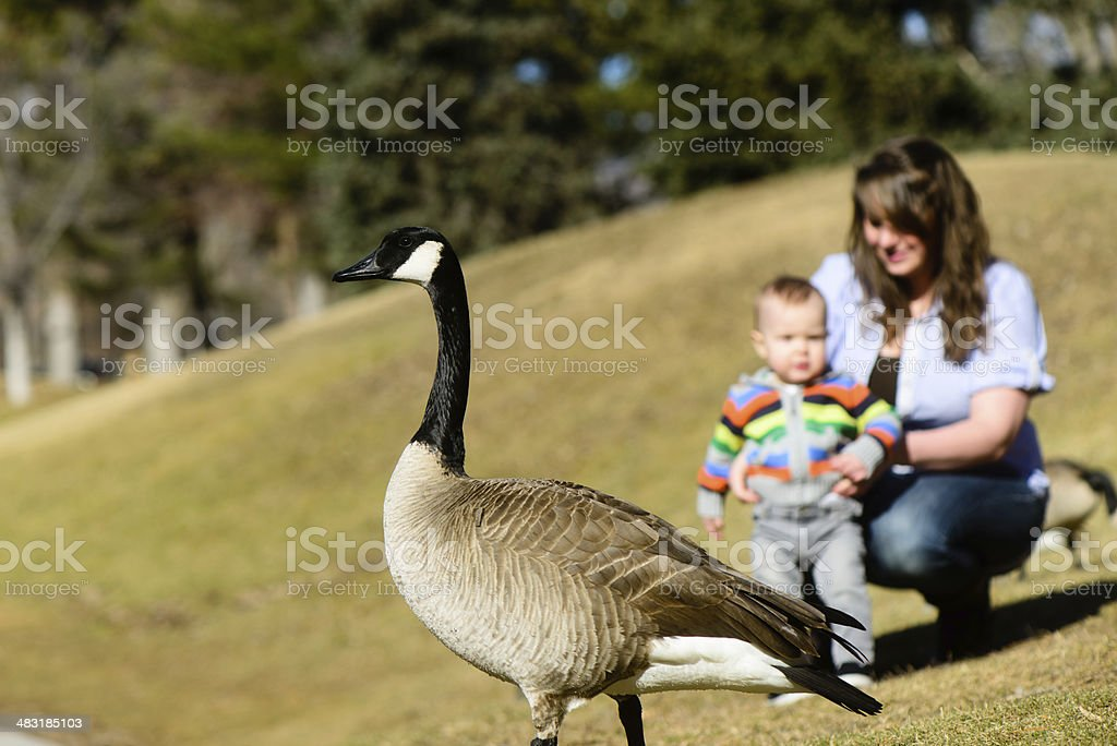 Mother and Son seeing Geese at the Park stock photo