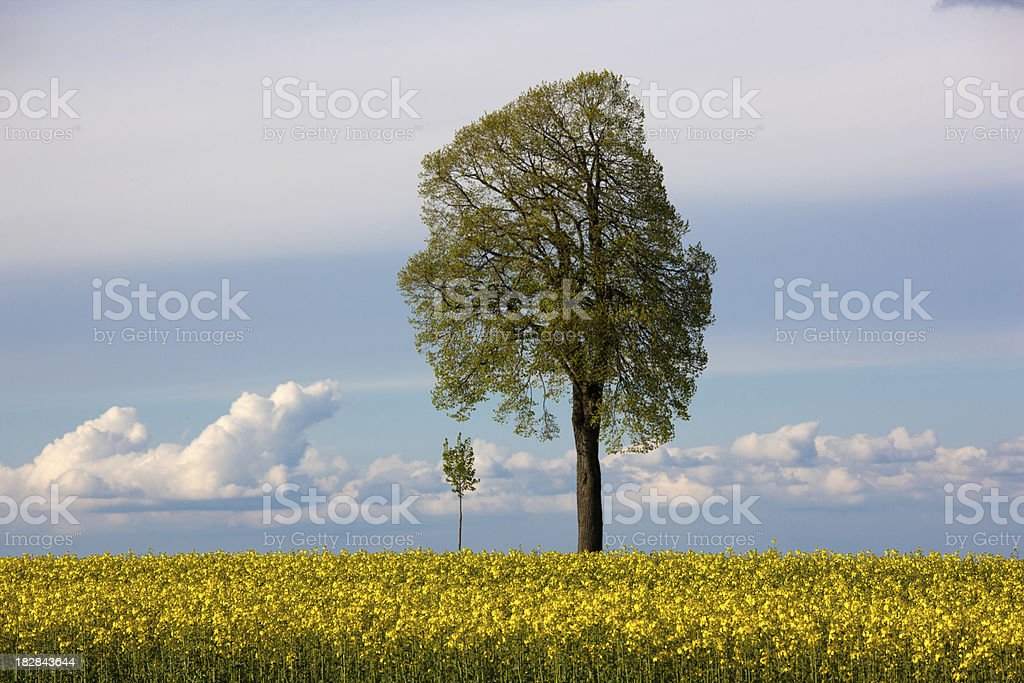 mother and son tree stock photo