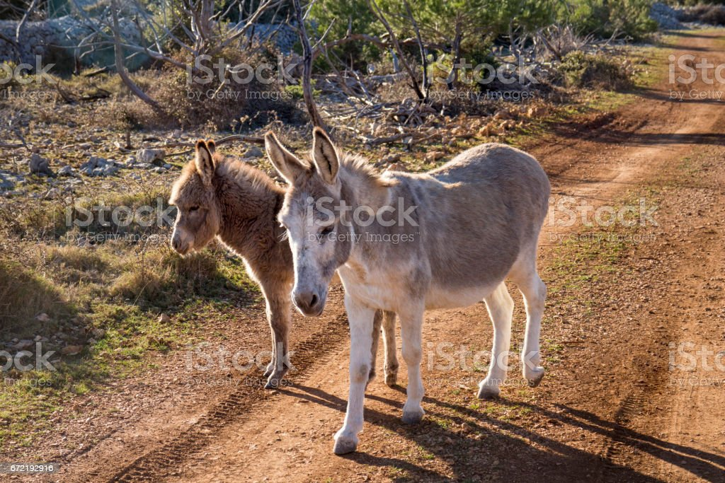Mother and young donkey stock photo