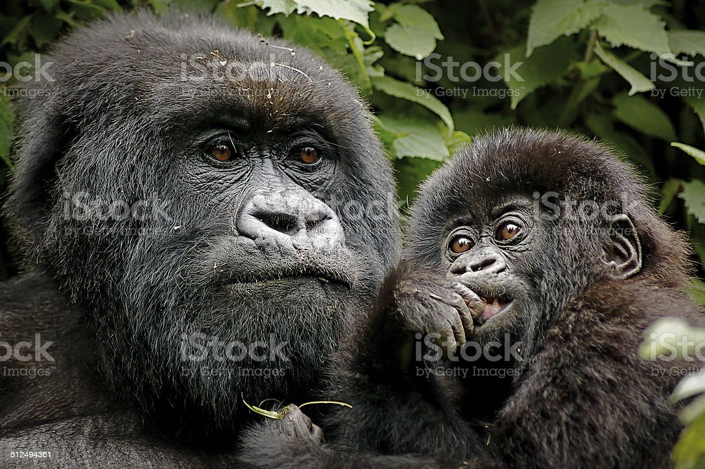 Mother & Baby stock photo