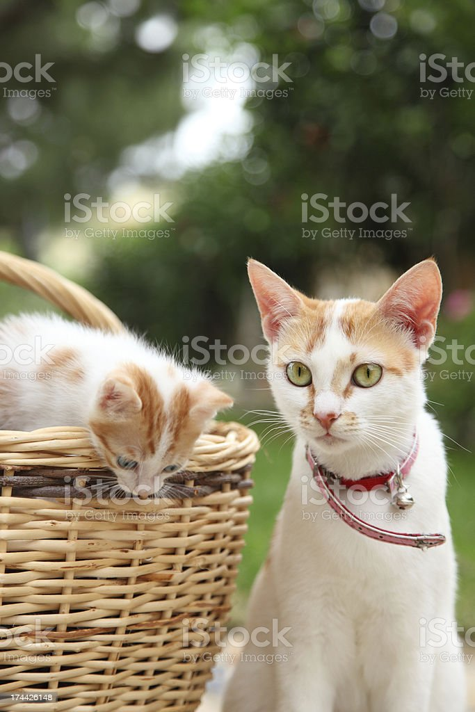 mother cat and her curious kitten royalty-free stock photo
