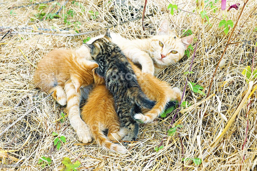 Mother cat with young kittens in the wild royalty-free stock photo