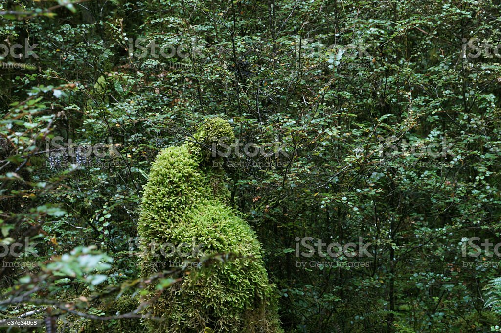 Mother & Child in the Milford Track in New Zealand stock photo