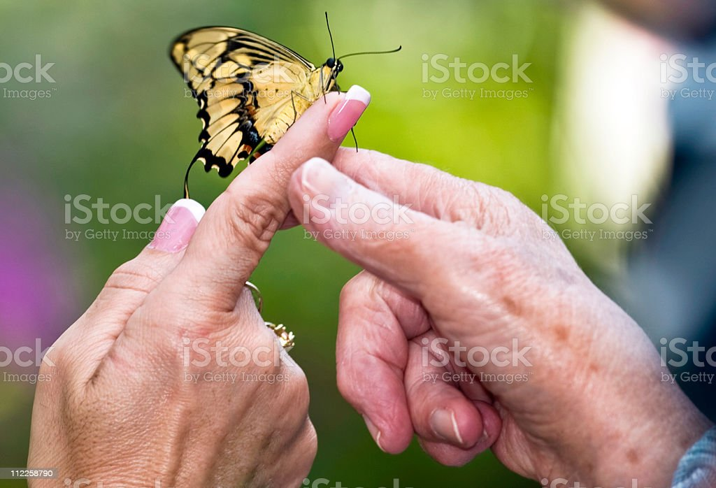 mother daughter hands holding a Butterfly stock photo