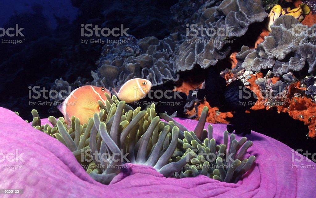 Mère couleurs de l'océan photo libre de droits