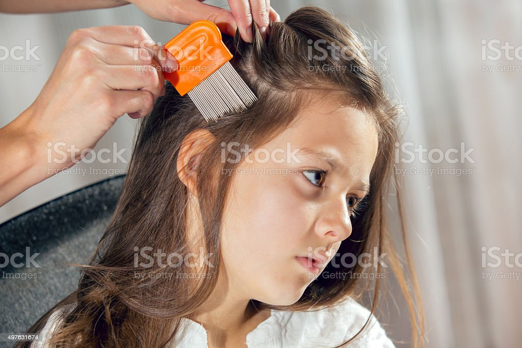 Mother using a comb to look for head lice. stock photo