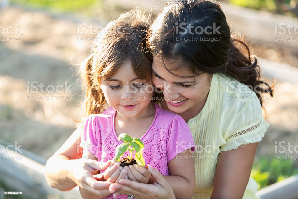 Mother with little girl holding seedling stock photo
