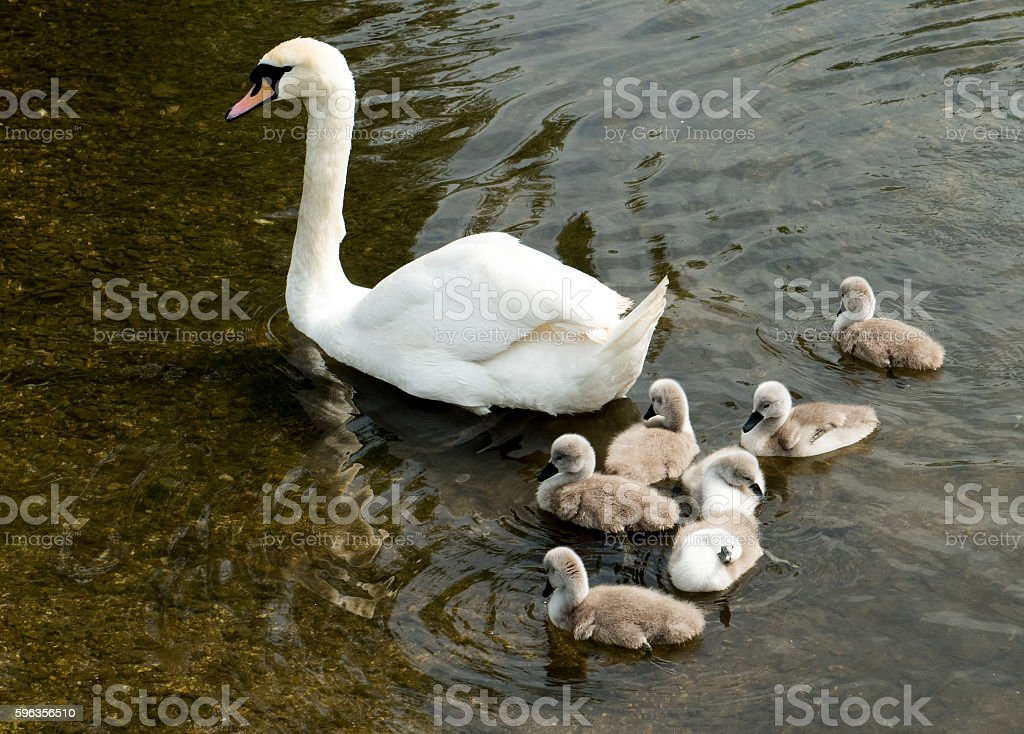 Mothering royalty-free stock photo
