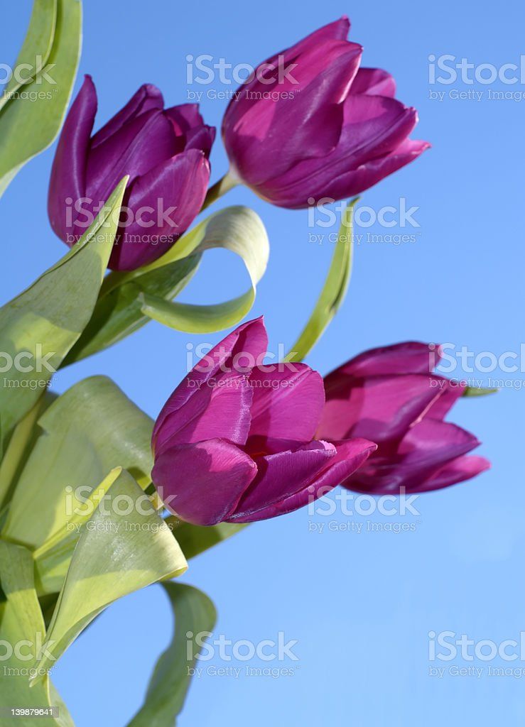 Mothers day (series) royalty-free stock photo