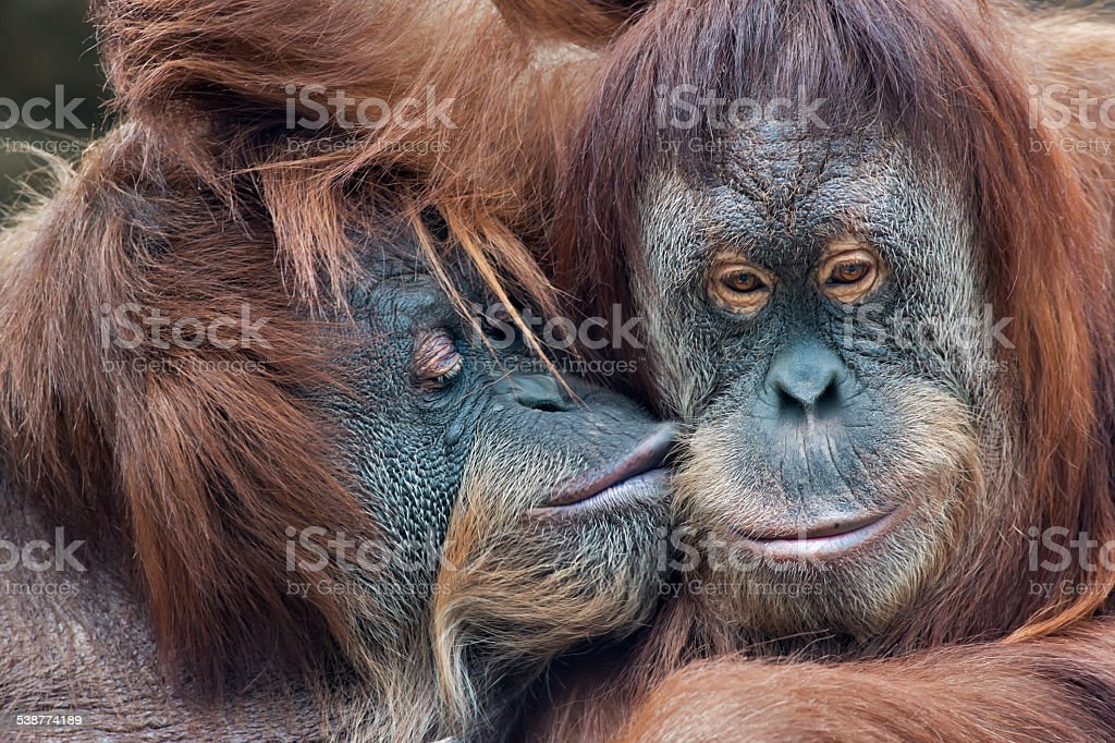 Mother's kissing her adult daughter. stock photo
